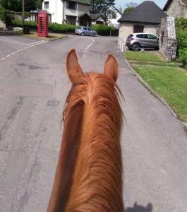 Saddleup-Gileston